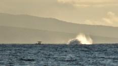 Maui (170 of 2119)