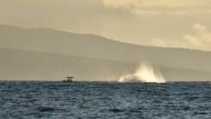 Maui (171 of 2119)