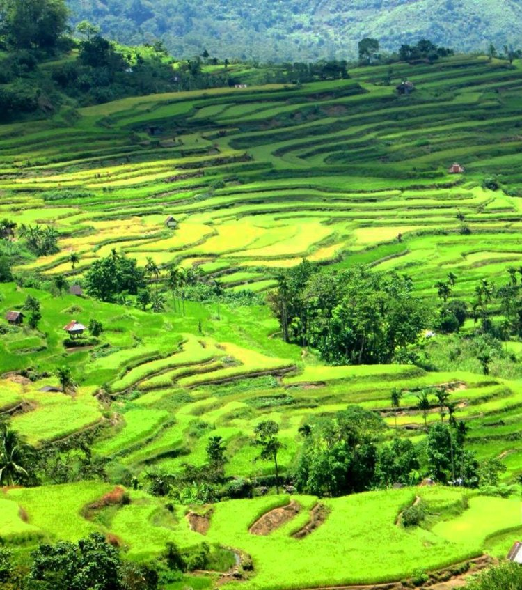 Natonin Rice Terraces is one of the best rice terraces of the Philippine Cordilleras