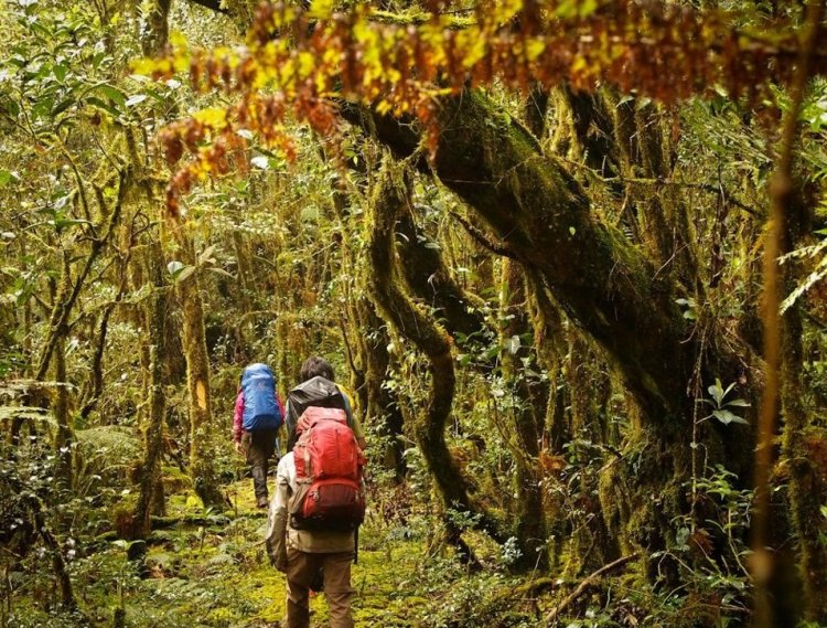 Mossy trail to Mt Kalawitan