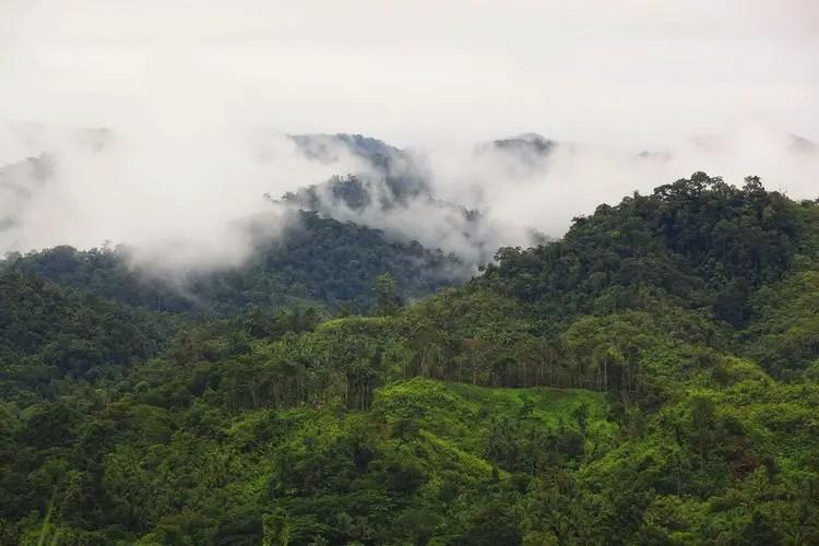 Samar Island National Park is one of Samar Tourist Spots.