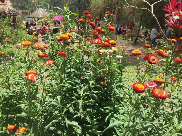 Flowers at Botanical Garden Baguio