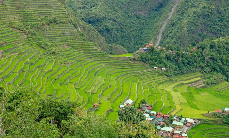 Lush view of Batad Rice Terraces
