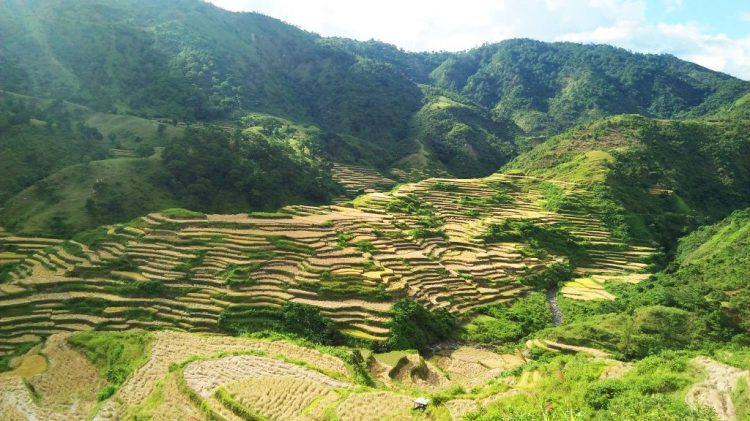 Betwagan Rice Terraces in the Philippines