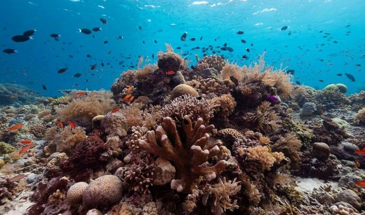 Tubbataha Reef National Marine Park is one of the best Sulu tourist spots/Sulu attractions