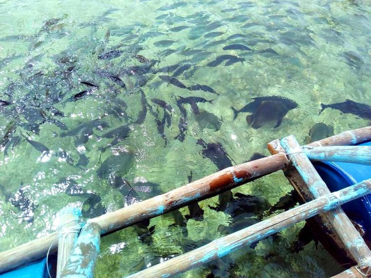 Juag Lagoon Marine Sanctaury is one of the best tourist spots/attractions in Sorsogon province