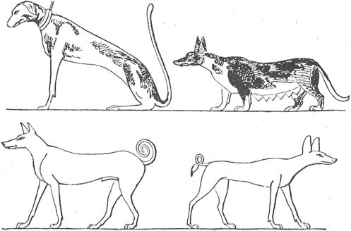 Four Breeds of Egyptian Dogs.png