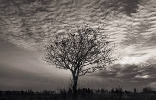 Wintery Sky