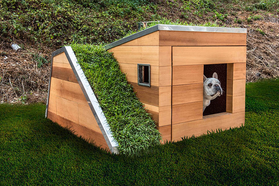 Eco-friendly dog house design boasts impressive features