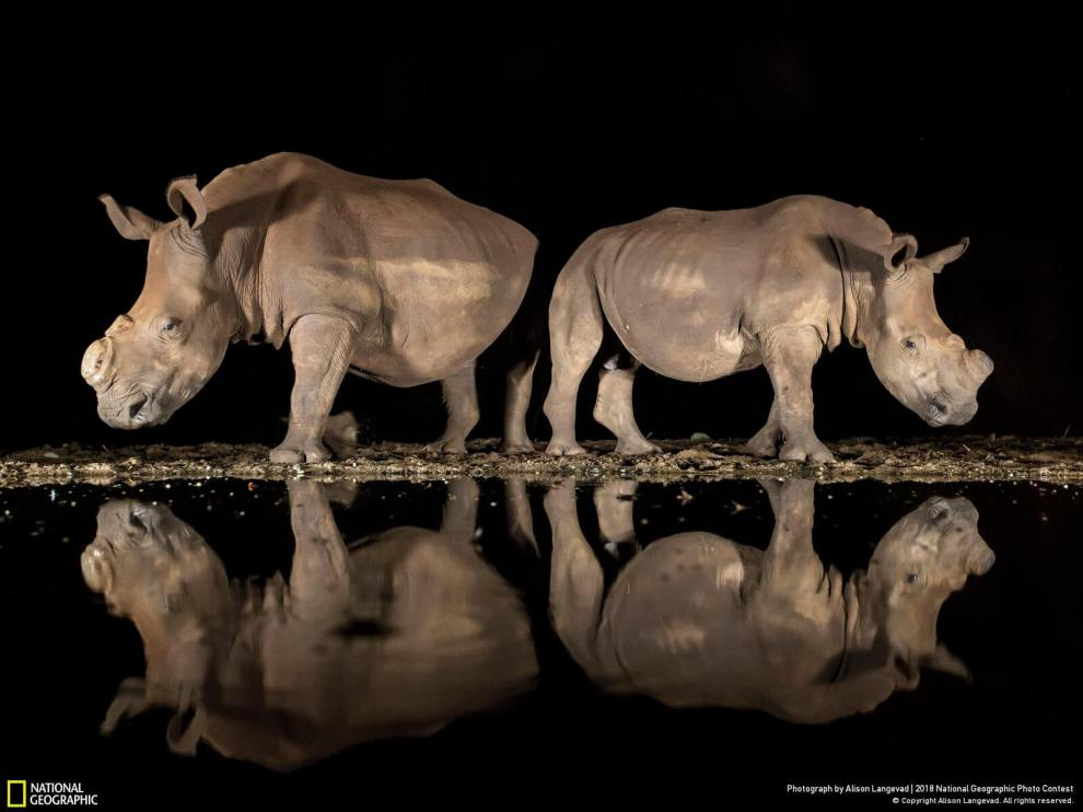 2018 National Geographic Photo Contest: 3rd place wildlife category