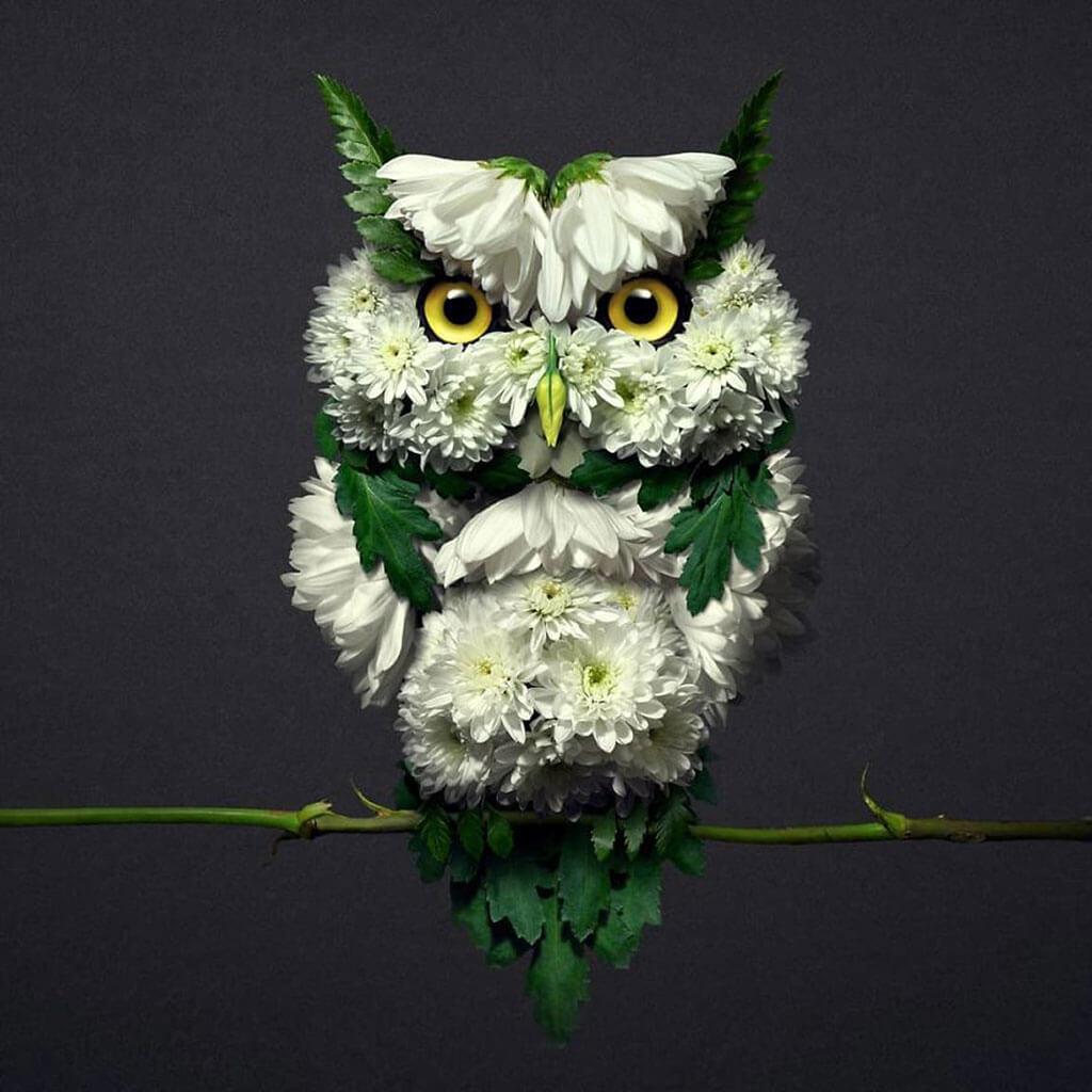 Floral portraits by Raku Inoue