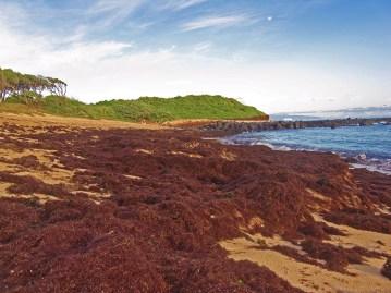 kuau beach wrack