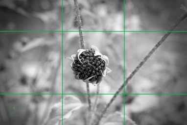 WM_032917_002 grid lines copy