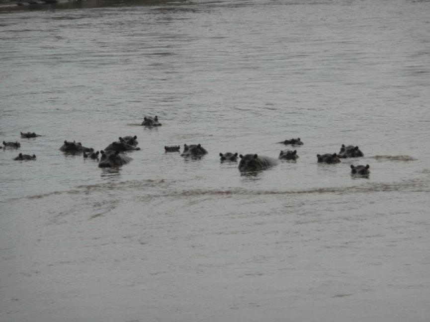 Julia Ember travel photos - hippos