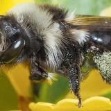 La miel es sana