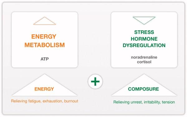 mecanismos de la rhodiola y el cortisol
