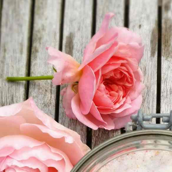 Engelsk rose – Fotograferet af Christel © danishthings.com. Spiselige stauder, blomster og urter – som dekoration eller i retter. Find opskrifter, gratis print og inspiration til årets gang.