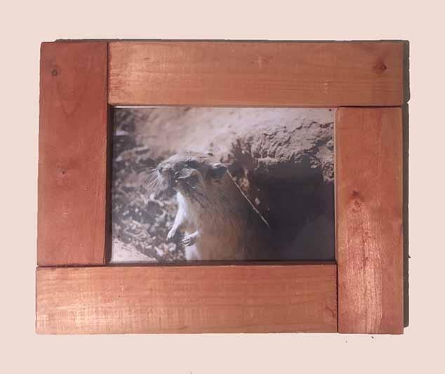 """תמונה עם מסגרת עץ מק""""ט: 1530"""