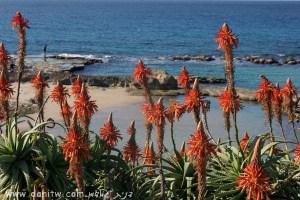 1333 פרחים ועצים, הגליל המערבי, ישראל