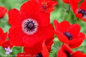 1506 פרחים ועצים, הנגב, ישראל