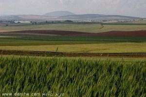 1890 שדות, עמק המעיינות, ישראל