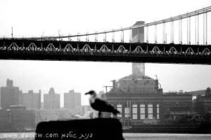 """286 שחור לבן, גשרים, ניו יורק, ארה""""ב"""