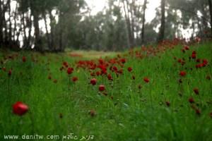 292 פרחים ועצים, הנגב, ישראל