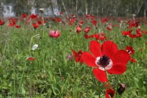3027 פרחים ועצים, עמק יזרעאל, ישראל