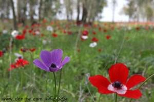 3028 פרחים ועצים, עמק יזרעאל, ישראל