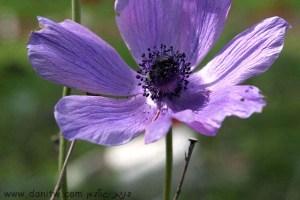 3029 פרחים ועצים, עמק יזרעאל, ישראל