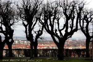 380 פרחים ועצים, גרמניה