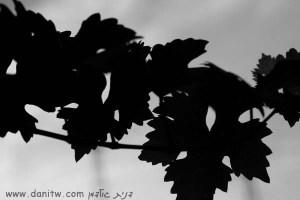 3876 אבסטרקטי, פרחים ועצים, שחור לבן, חוף הכרמל, ישראל