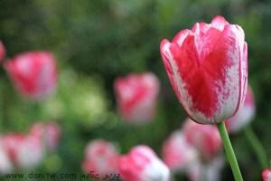 392 פרחים ועצים, הולנד