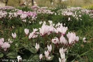 4040 פרחים ועצים, עמק יזרעאל, ישראל
