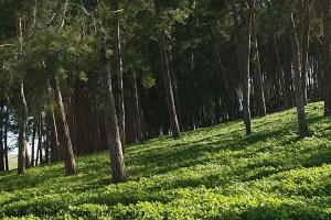 5017 פרחים ועצים, עמק יזרעאל, ישראל