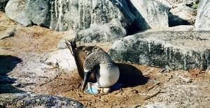 5192 בעלי חיים, אקוודור