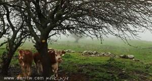 5207 בעלי חיים, רמת הגולן, ישראל