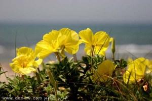 880 פרחים ועצים, חדרה, ישראל