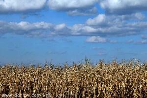 תמונות יפות למכירה צילום שדות, רומניה 5085