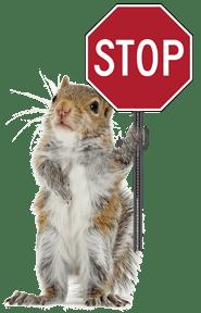 Squirrel