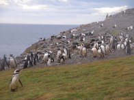 A few of the 120,000 penguins standing around