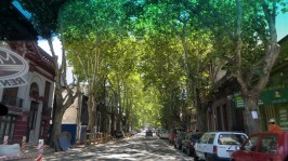 In Montevideo tree lined steets are the norm