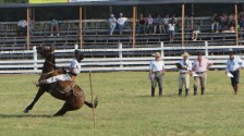 Dressage competition includes stopping the horse as quickly as possible from a full run.