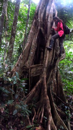 The tree roots inspire climbing
