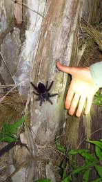 yes - Dan's hand near a giant tarantula, to show its size