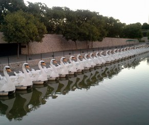 Need a swan? Valencia