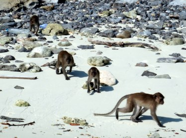 Monkey beach, Maya Bay, Ko Phi Phi Don