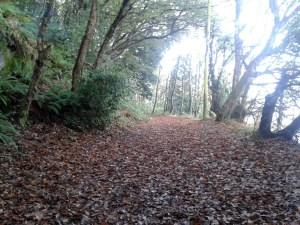 Perfect Autumn running.