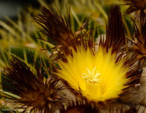 2016-03-06_cactus-160