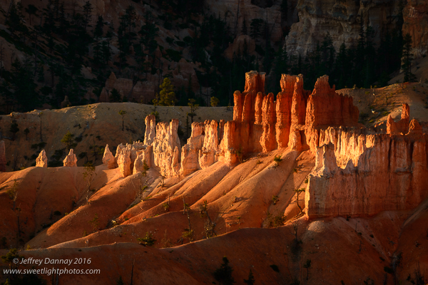 Just after the sun rose, these hoodoos were bathed in beautiful sunlight.